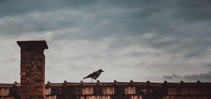 L'interprétation des rêves sur le corbeau naissant. Principalement lié entre les relations des parents avec leurs enfants.
