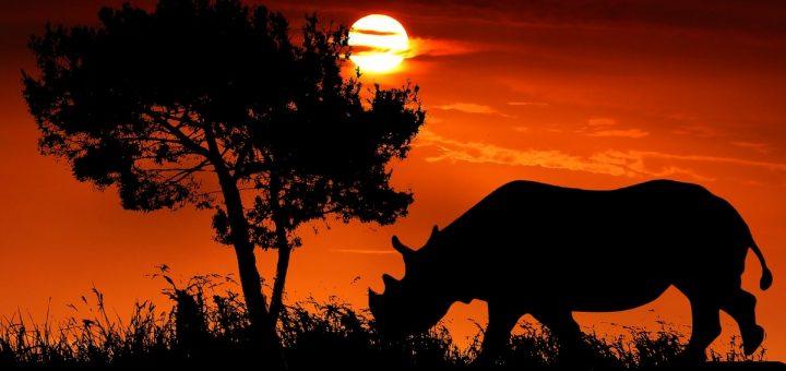 Qu'est-ce que cela signifie quand vous rêvez de rhinocéros en Islam ?