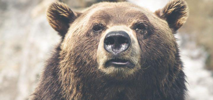 Qu'est-ce que cela signifie quand on rêve d'ours en Islam ?