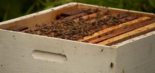 Qu'est-ce que cela signifie quand on rêve d'une ruche d'abeilles en Islam.